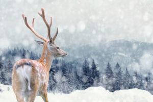 Corso-di-pittura-a-pastello-soggetto-a-tema-invernale-associazione-alfa-aosta